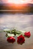 在水的玫瑰 库存图片