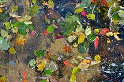 在水10的秋叶 免版税图库摄影