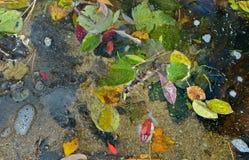 在水11的秋叶 免版税库存照片