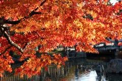 在水的秋天叶子 库存照片