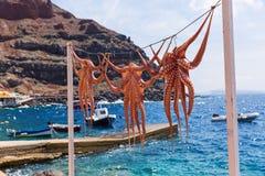 在绳索的章鱼干燥 图库摄影