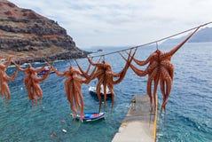 在绳索的章鱼干燥 库存照片