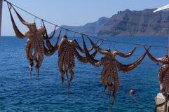 在绳索的章鱼 免版税图库摄影