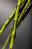 在水的竹子 库存照片