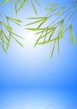 在水的竹草叶子 免版税库存照片