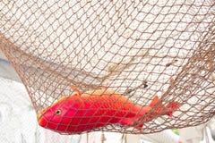 在绳索的红色橙色塑料鱼钓鱼网 库存图片