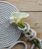 在绳索的美丽的白色水芋百合 免版税图库摄影
