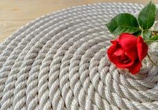 在绳索的美丽的红色玫瑰百合 库存图片