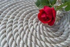 在绳索的美丽的红色玫瑰百合 库存照片