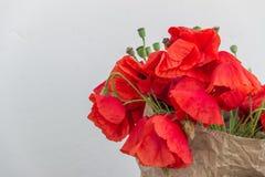 在轻的背景的开花的野生鸦片 免版税库存图片