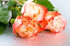 在轻的背景的美丽的三朵桔子玫瑰色花与dro 免版税库存照片