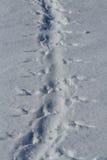 在他的腹部w爬行的雪Adelie企鹅的脚印 免版税库存图片