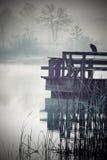在水的苍鹭 免版税库存照片