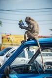 在读的街道上的猴子 免版税库存图片