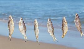 在绳索的被捉住的鱼干燥 库存图片