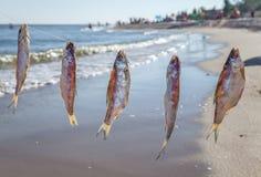 在绳索的被捉住的鱼干燥 免版税库存照片