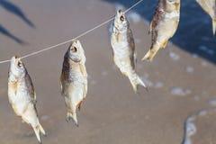在绳索的被捉住的鱼干燥 图库摄影