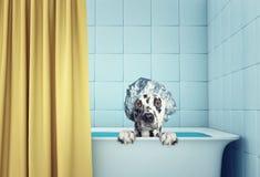 在浴的逗人喜爱的湿狗 免版税库存照片