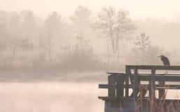 在水的镇静苍鹭 免版税库存图片