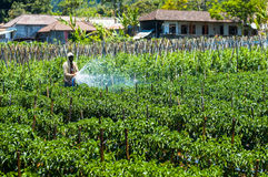 在他的领域的农夫喷洒的杀虫剂 免版税库存图片