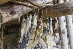 在绳索的鱼干燥 免版税库存图片
