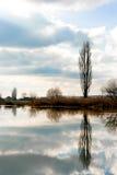 在水的结构树反映 免版税库存图片