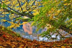 在水的结构树 免版税图库摄影