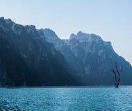 在洪水的死的树从水坝,泰国 免版税库存照片
