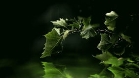 在水的绿色叶子 股票录像
