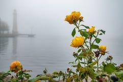 在水的黄色玫瑰 免版税库存照片