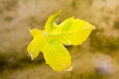在水的黄色秋天叶子 免版税库存照片