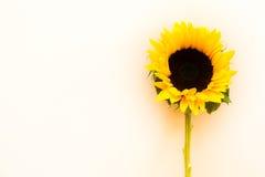 在轻的backgorund的向日葵 库存图片