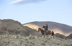 在他的hotse的蒙古游牧人老鹰猎人 免版税库存照片