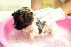 在浴盆的小狗 免版税库存照片