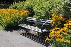 在黑眼睛的苏珊雏菊之间的一条长凳 库存照片