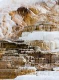 在黄石国家公园的智慧女神大阳台 免版税库存图片