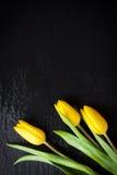 在黑石背景的黄色郁金香与水滴 库存图片
