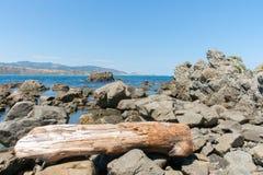 在破碎机海湾的岩石海滩在入口向惠灵顿哈勃 库存图片