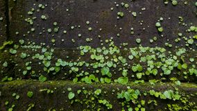 在水秋天的一片心形的叶子 免版税库存照片