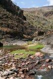 在索科特拉岛海岛上的绿洲旱谷Daerhu  免版税图库摄影