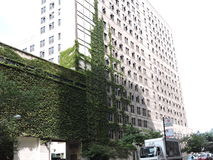 在建筑学芝加哥的街市绿叶积累 库存照片