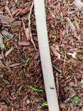 在水管的蚂蚁 免版税库存照片