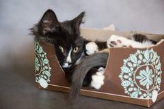 在组织箱子的滑稽的小猫 库存图片