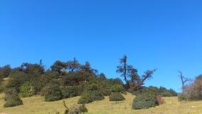 在3000米的树山 免版税库存照片