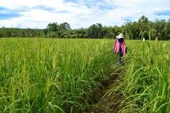 在稻米的稻草人 库存图片