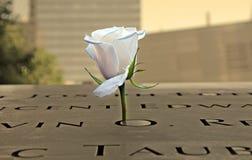 在9-11纪念品的白色玫瑰 免版税库存照片
