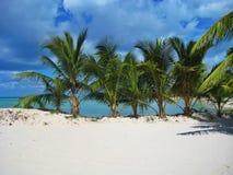 在绍纳岛的棕榈树在多米尼加共和国 免版税库存图片