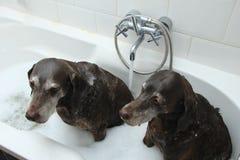 在浴缸的狗 免版税库存照片