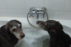 在浴缸的狗 免版税图库摄影