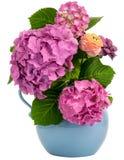 在水罐的八仙花属 免版税图库摄影